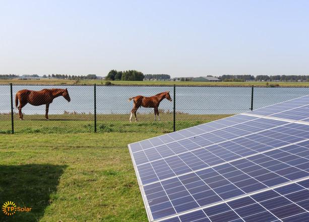 Paard en veulen van de buren
