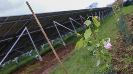 Proef dubbel grondgebruik Zonnepark Berkelweide