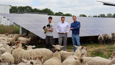 In beeld: Dirk Geenen, schaapherder Zonnepark Uden