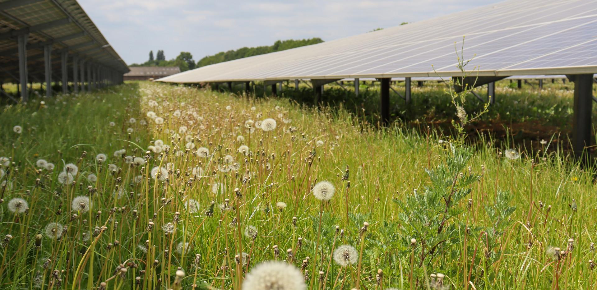 Bloemrijk grasland tussen de rijen.jpg