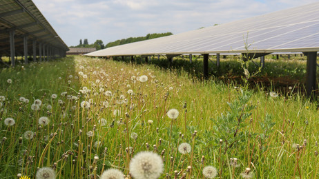SDE++ Subsidie voor Zonnepark Vluchtoord II in Uden
