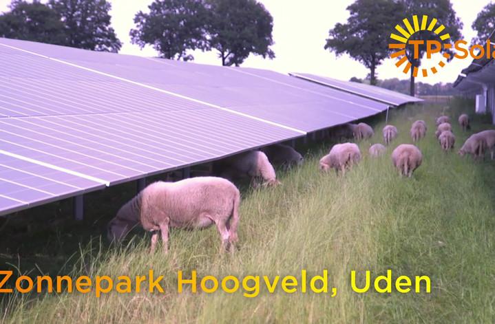 Video schapen voor op Youtube.mp4