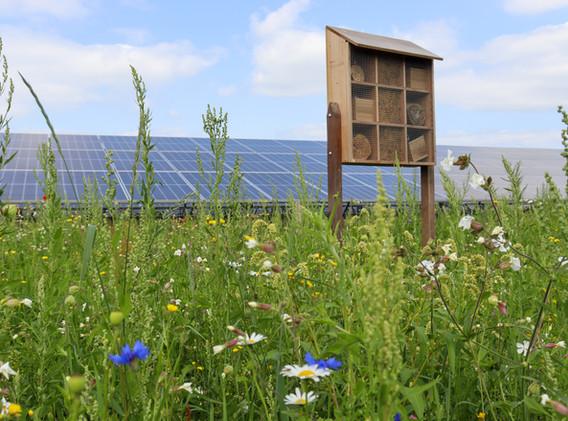 Bijenhotel en bloemrijk grasland