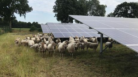 Subsidie derde zonnepark TPSolar in Lochem toegekend