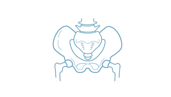 Blue Sky Wellness Pelvic Model.jpg
