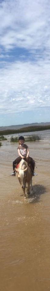 Horse Riding Colonia del Sacramento Criollo horses Historical Day Trip Uruguay
