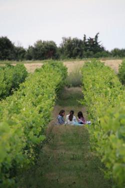 dans la vigne d'Alicante