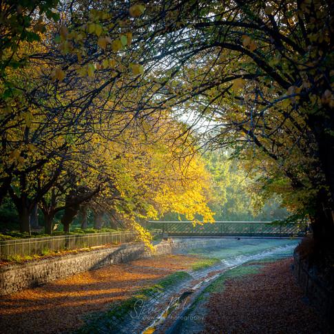 Autumn in Rosalind Park-2-Edit.jpg