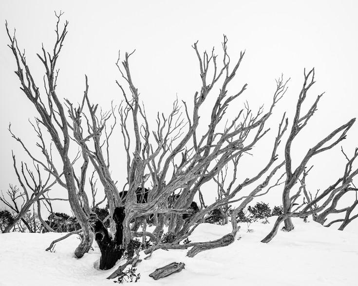 Sticks in the Snow