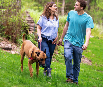 The Dog Days of Summer: Pet Safety