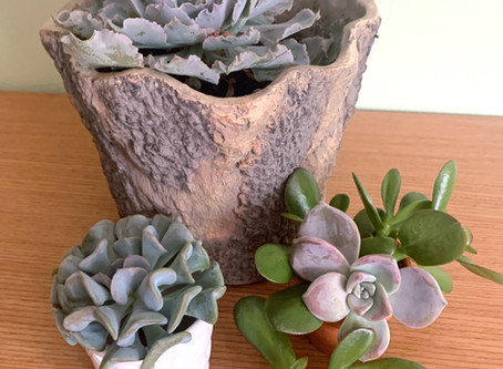 Oh Sweet Succulent!