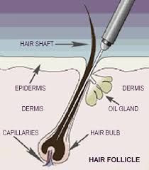 Electrolysis Hair Removal - What's it all about?