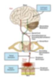 Drug Interaction sites.jpg