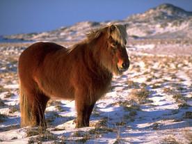 Mode de vie d'un cheval rustique