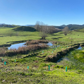 Releasing riparian plants