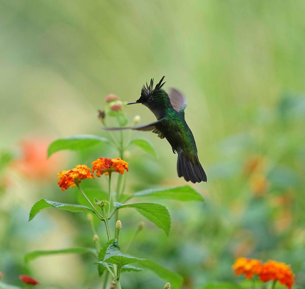 Kolibris im Garten