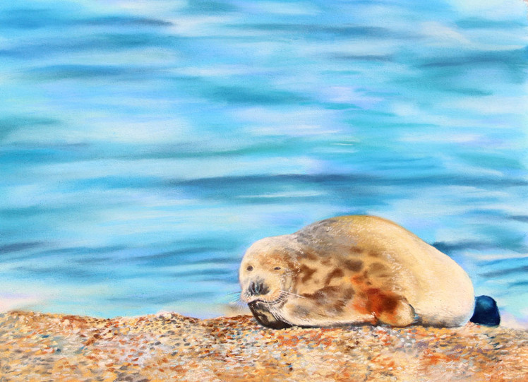 Seal blue sea