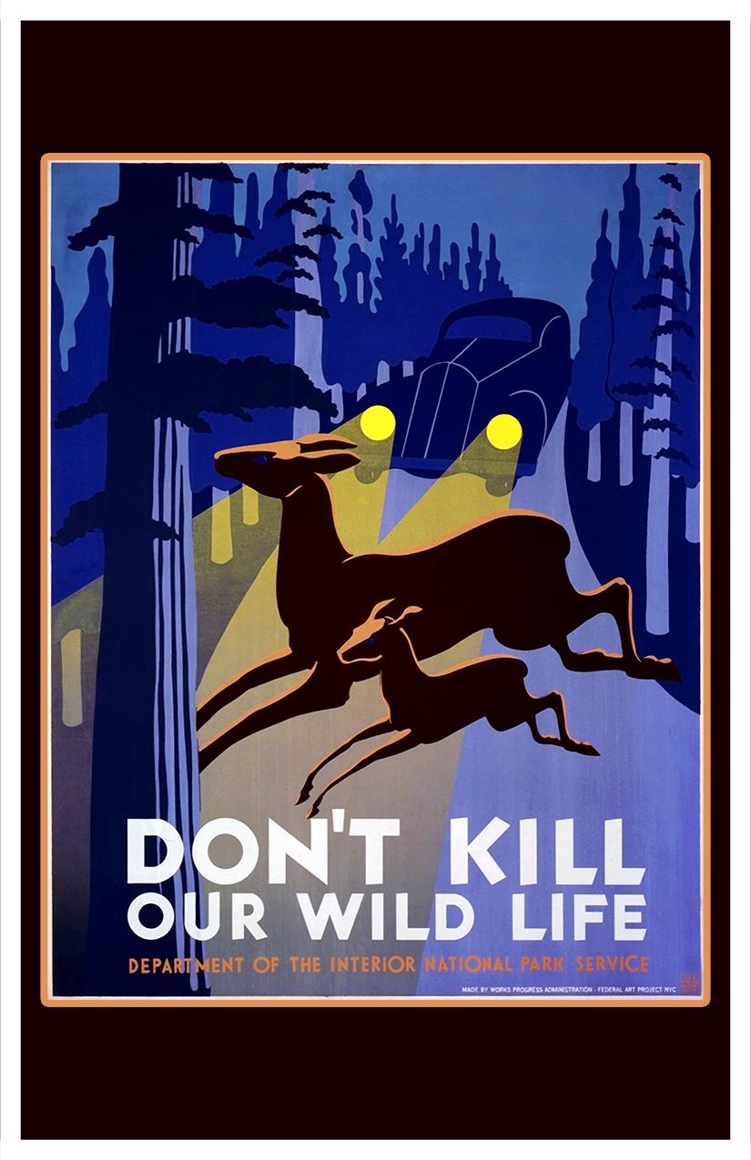 Dont Kill Wild Life
