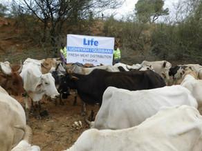 LIFE Distributes Fresh Meat in Ethiopia