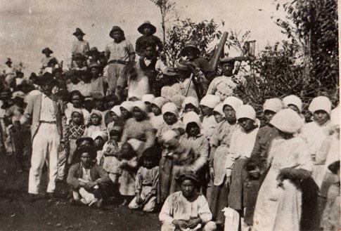 グァタパラ耕地内のコーヒー園に並ぶ日本移民(1920年頃)