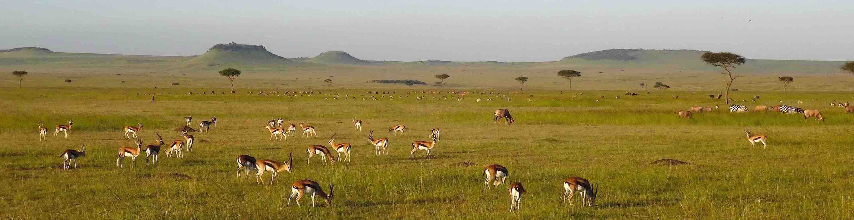Plains-Game-Hunting-Tanzania-Africa-Gaze