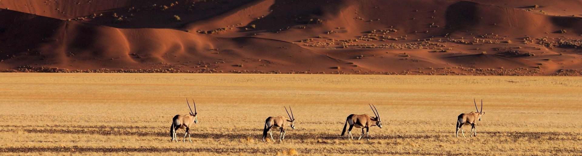 Africa-Namibia-Hunting-Safaris-Gemsbok-O