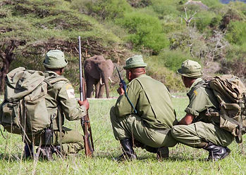 Three anti-pouching rangers, kneeling in official green uniform & equipment, viewing an African Elephant in the distance.