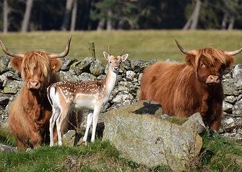 Sustainable-Conservation-Scotland-Huntin