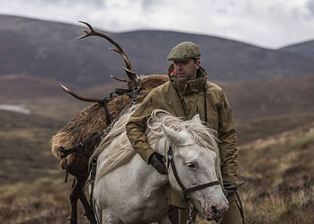 Scottish Cairngorms estate / forest highlands hill pony bring a red deer stag home after successful stalking, hunting day.