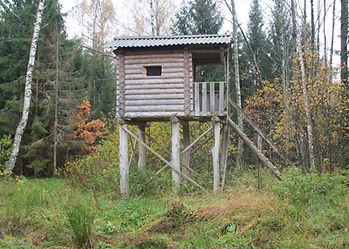 A wooden high box with ladder, balcony & roof in mixed birch & larch woodland, used for dusk, night and dawn hunts /shooting.