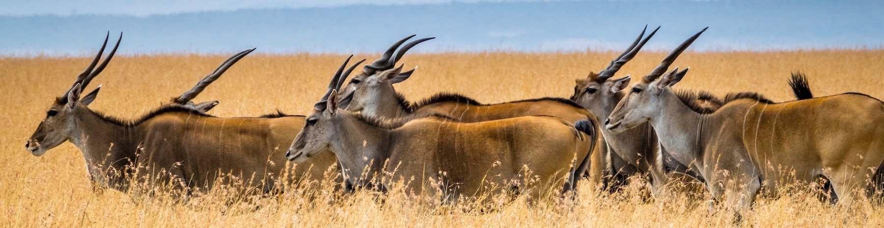 Sustainable-Wildlife-Conservation-Huntin
