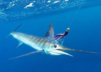 Marlin-Sea-Fishing-Watamu-Kenya-Coast-Un