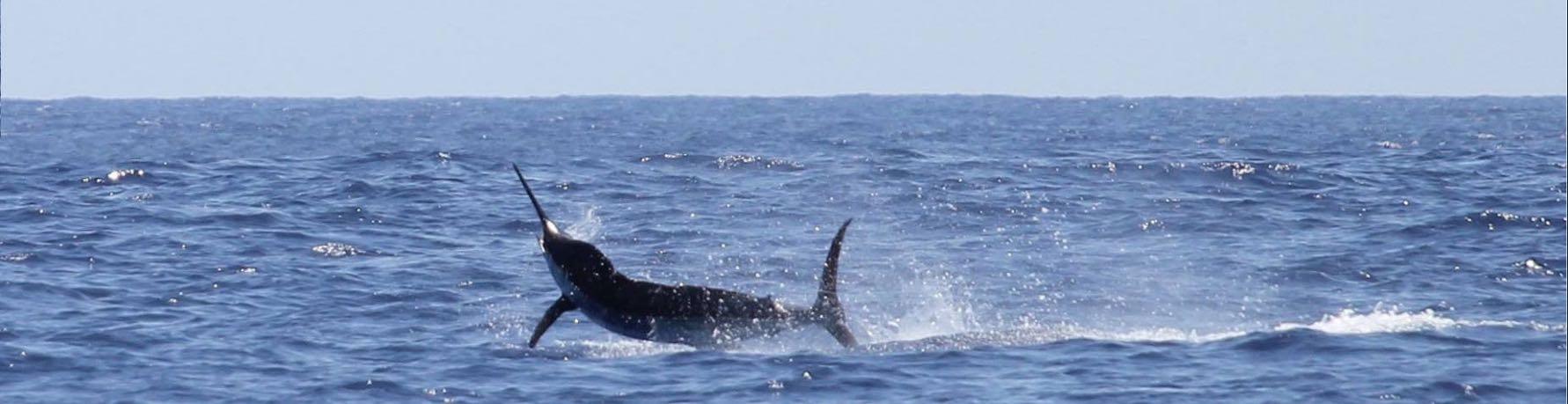 Sea-Fishing-Malindi-Kenya-Coast-Marlin-F