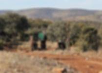 Driven-Red-Partridge-Shooting-Spain.jpg