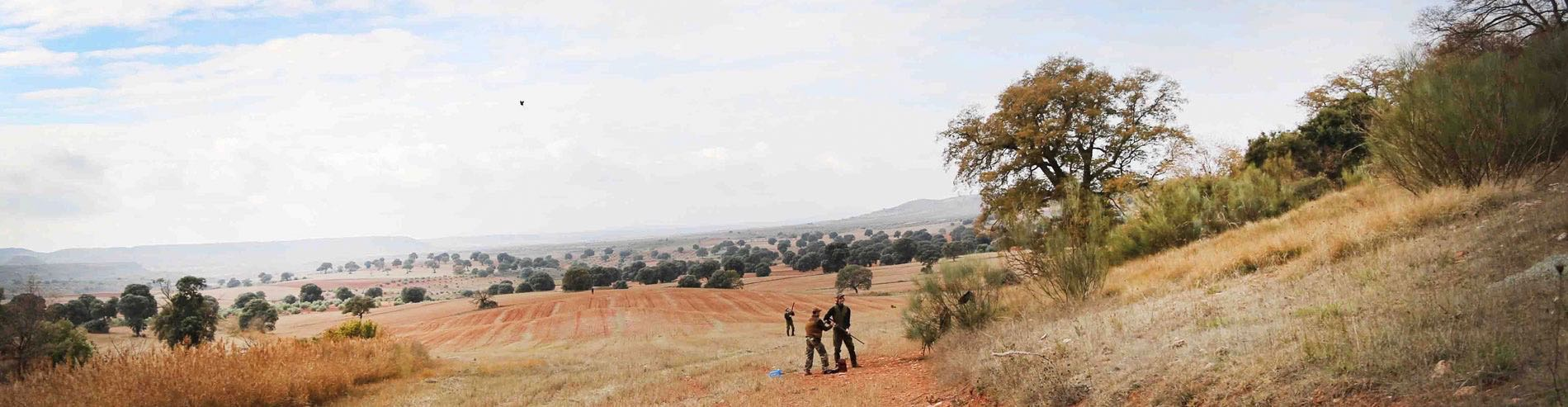 Driven high partridge shooting in Spain amongst dry olive tree & stubble fields, shooting team with