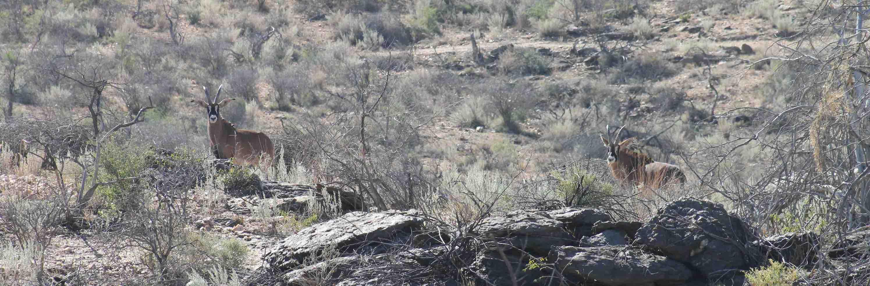 namibia-sustainable-plains-bush-hunting-