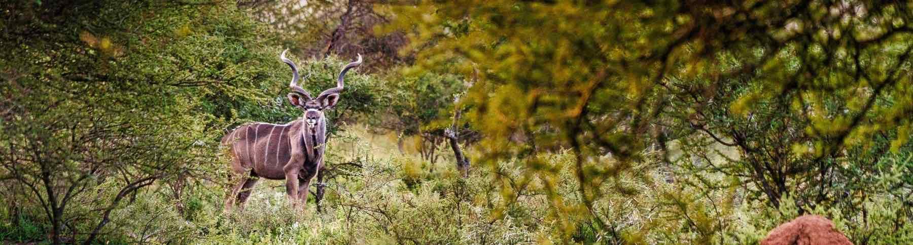 Namibia-Plains-Game-Hunting-Safaris-Afri