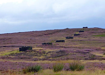 Grouse shooting butts, for driven days on a well managed heather burnt moorland.