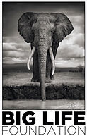 The Big Life Foundation logo with black & white elephant facing forward, funds to fight ivory tusk poaching in East Africa.