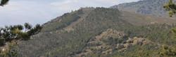 Exclusive mountain hunting area in Guadix, Granada, Andalucia, Spain for ibex, rocky tree estate