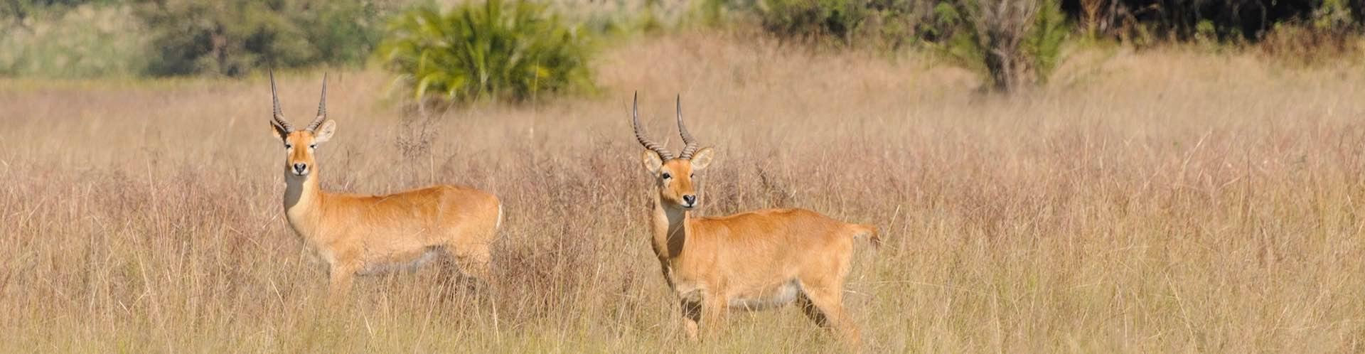 plains-game-hunting-safaris-africa-savan
