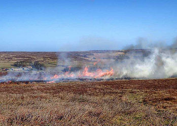 Driven-Red-Grouse-Shooting-Management-He