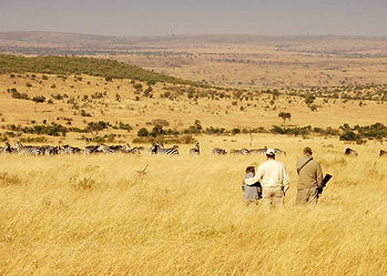 Hosted ecotourism hunting; professional guide & hunter view the biodiverse grasslands of the enhanced Masailand ecosystem.