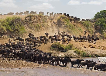 Tanzania-Great-Migration-River-Crossing-