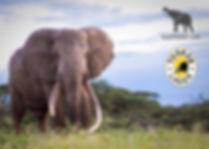 Authentic-Luxury-Photographic-Safaris-Bi