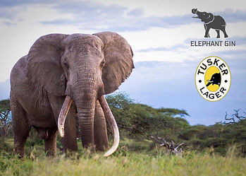 Tusker Lager & Elephants Gin charity donation logo with African acacia thorn bush trees & large ivory tusks as background.