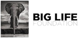 Big Life Foundation (BLF) is to protect & sustain elephant populations in East Africa.