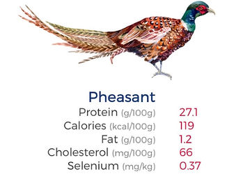 Water colour drawing of a pheasant, displaying game meat nutrition values of very low in fat & cholesterol, high in iron…..