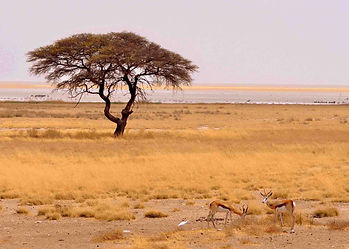 Plains-Game-Hunting-Africa-Sybarite-Spor