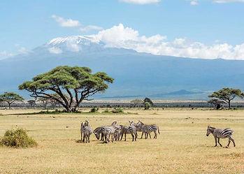 Africa-Authentic-Luxury-Photographic-Saf